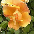 fleurs-roses-2 (12)