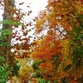 Linxe automne 2410157