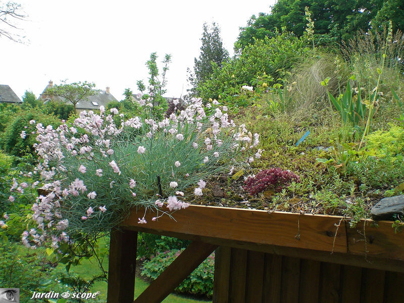 Toit de la cabane de jardin végétalisé