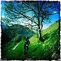 Jénorme en vallée d'Aspe (par Arno)