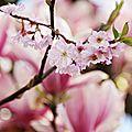 Mon printemps sera rose...