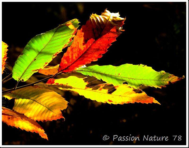 Feuilles en automne (7)