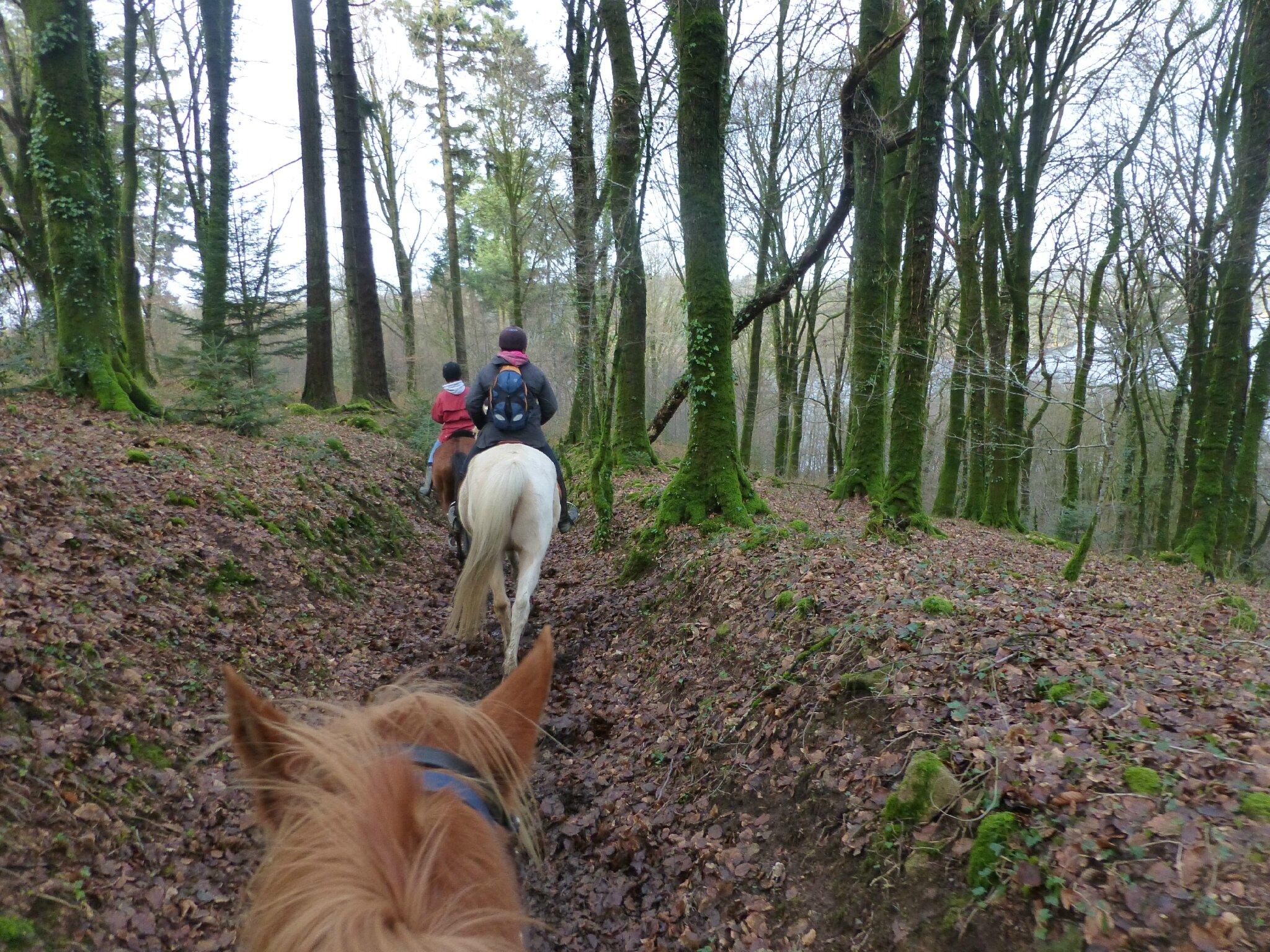 Balade à cheval dans la forêt P1080281