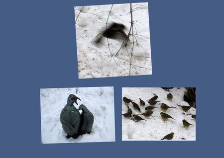 Fugleliv1