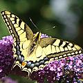 Les papillons de jour en brie