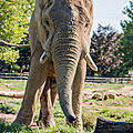 elephant beauval