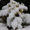 La neige a du bon pour les plantes !