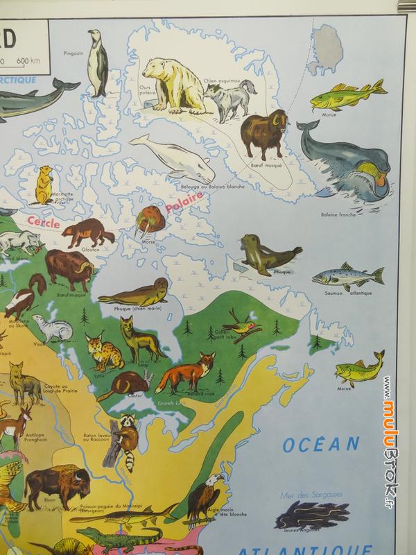 CARTE-Amérique-Nord-végétation-faune-3-muluBrok-Vintage
