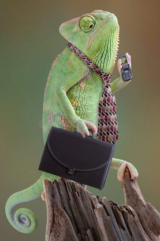 chameleon-businessman-5043326