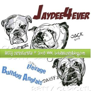 bulldog_anglais_elevage
