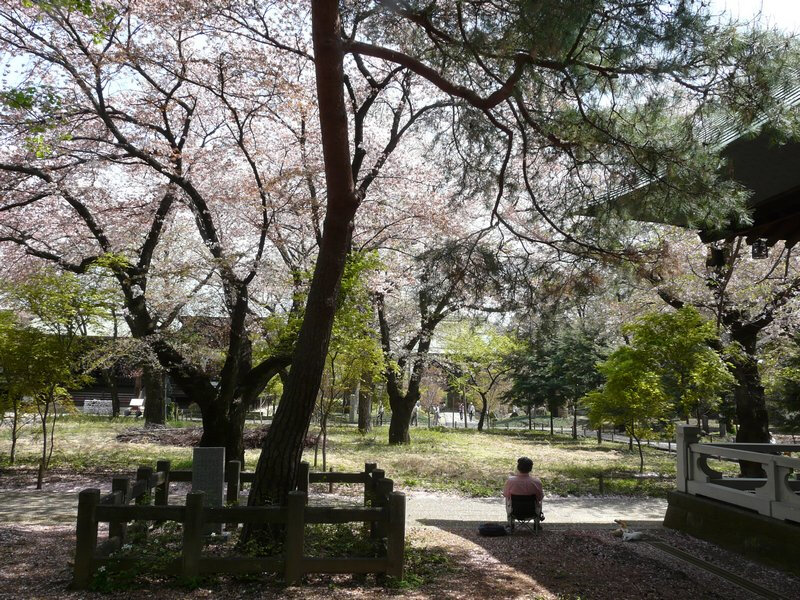 Canalblog Tokyo Cerisier 2010 Chiyugaoka Temple Hombutsu01