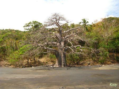 le_baobab