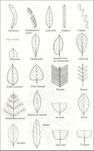 feuilles2970x1554