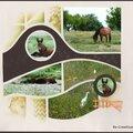 Le cheval de la prairie