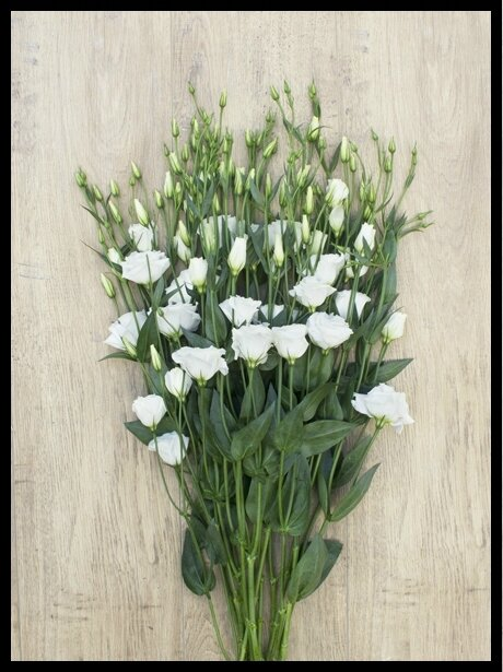 bloom s lisianthus blancs