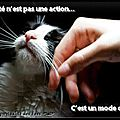 [grif'abrite] faire garder 30 chats, c'est possible!