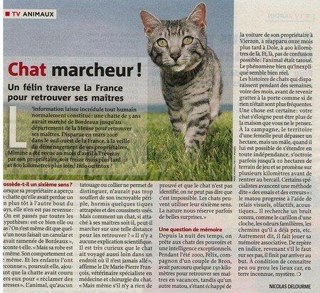 Chat_marcheur