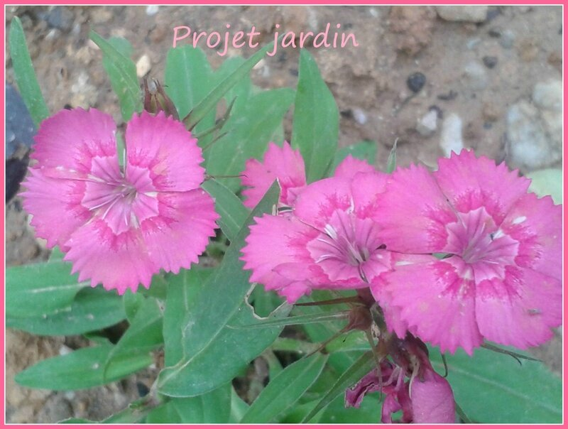 projet jardin1