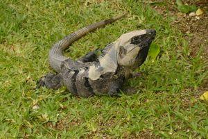 mexique août 2011 270