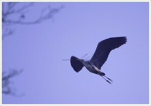 heron_vol_profil_transport_branche_050408