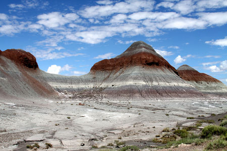 Petrified_Forest_21