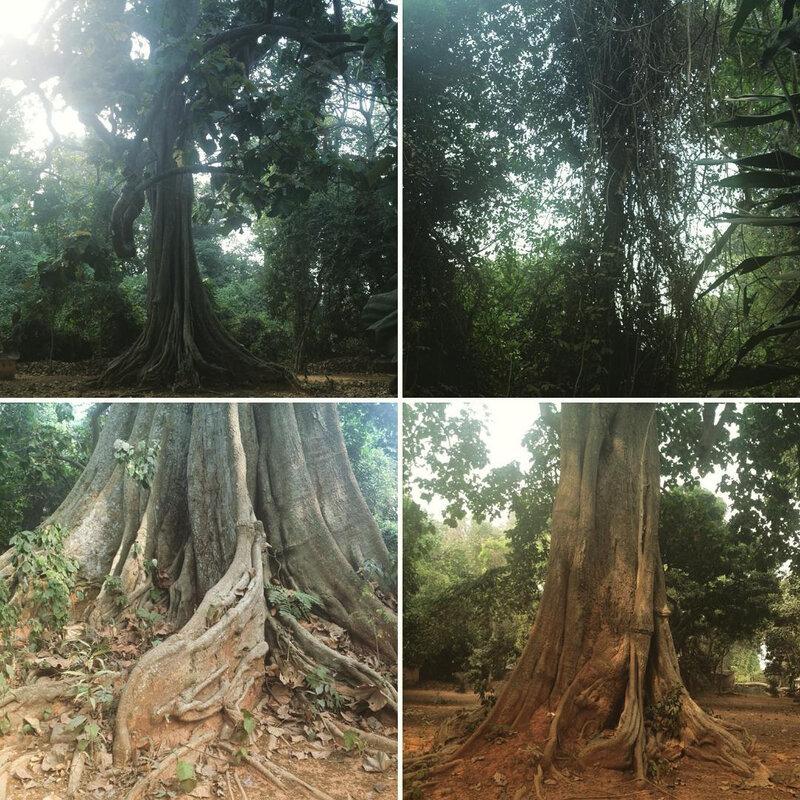 temple-maitre-vodoungan-rituel-vodoun-vaudou-11