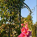 Windows-Live-Writer/Jardin_10232/DSCN0776_thumb