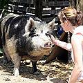 animal-1239332__340