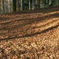 parterre de feuilles