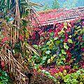 cabane au palmier