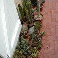 Groupe d'Euphorbia