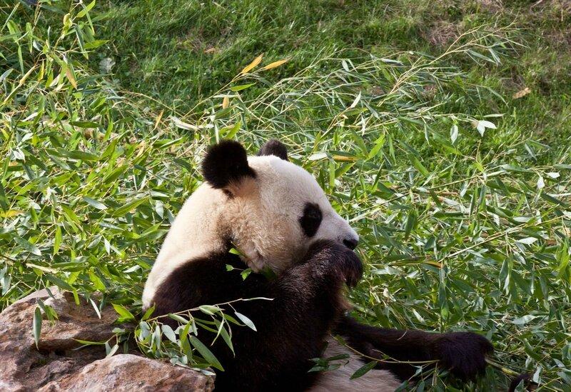 120-Panda Geant