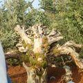 Parc Expo2010- sculpure (2)