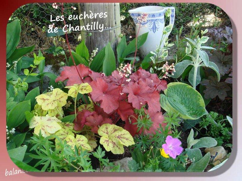 balanicole_2015_mai2_44_euchères chantilly
