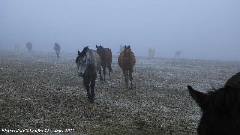 b Photos JMP©Koufra 12 - Chevaux - 26 janv 2017 - 0011