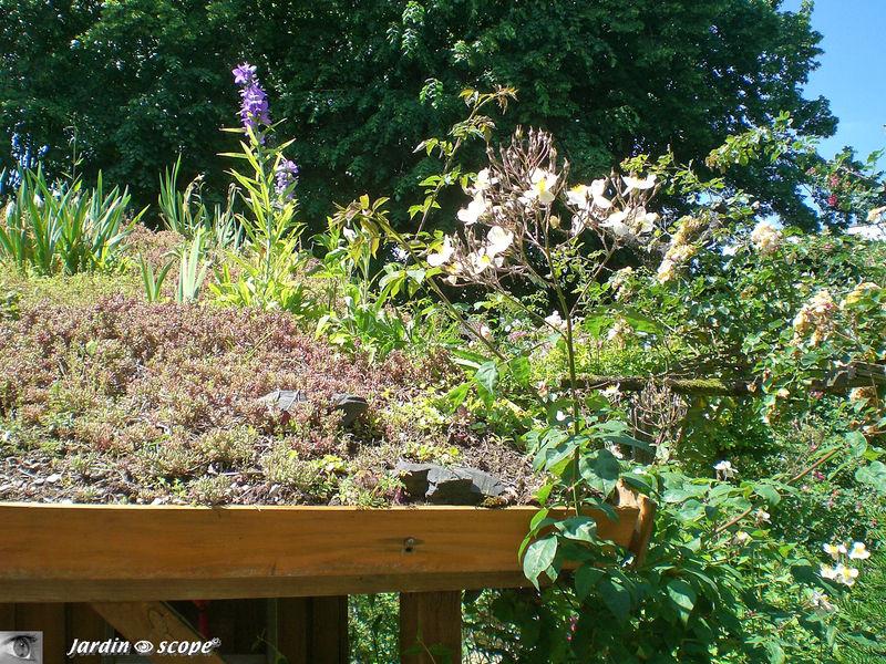 Le toit végétalisé de la cabane de jardin