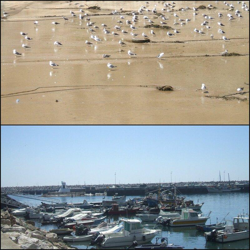 Port de Sesimbra