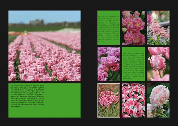 GardenColours1_Page_04