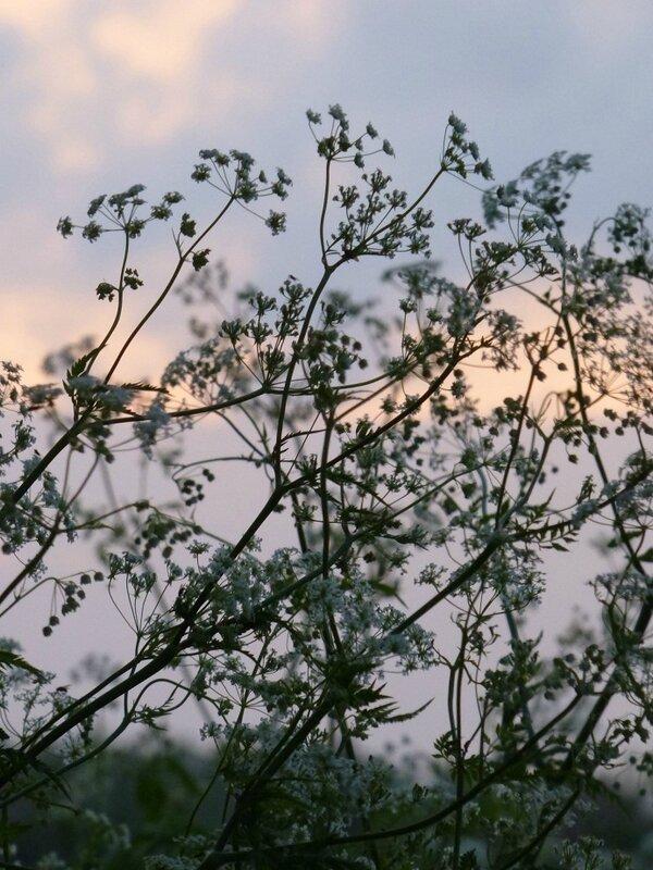 Blog 11-05-15 1