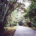 Route de Cocobeach