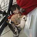 4 chatons cherchent une famille