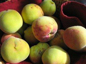 peach_001__Medium_