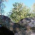 Un lieu ... la forêt de Fontainebleau
