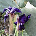 Fleurs de Léon 020318