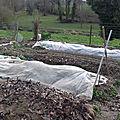 Semis des petits pois, fèves, aubergines, betteraves et poireaux