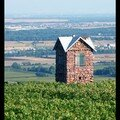 Dimanche de septembre sur les hauteurs d'eguisheim.