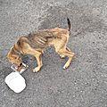 chienne squelettique jetée sur un parking