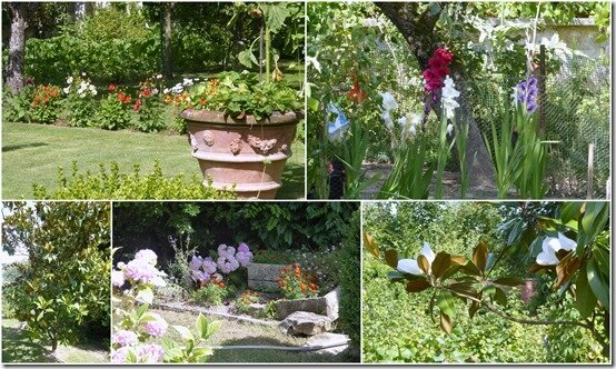 jardin 22 juillet 2019