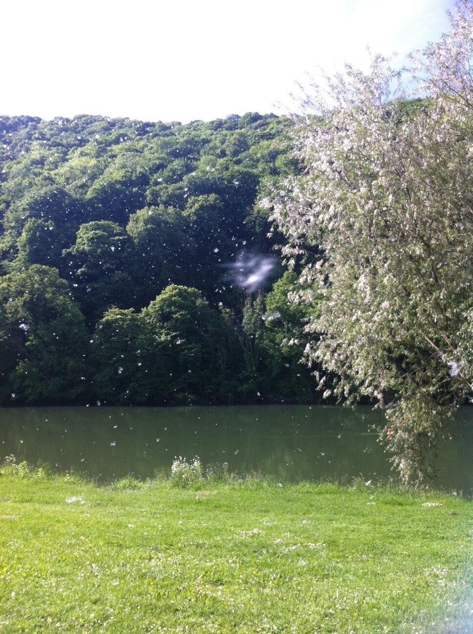 - Neige de printemps - Sur les bords du Doubs, La