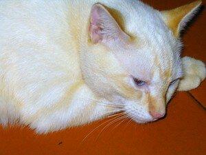 cats_001